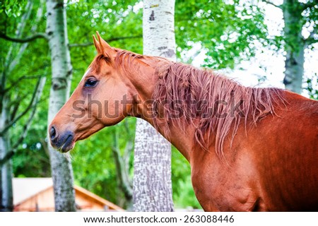 Powerful beautiful horse standing in the forest - stock photo