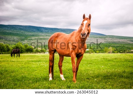 Powerful beautiful horse standing on the field - stock photo