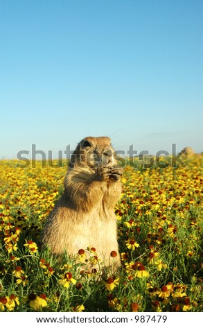 Praire Dog in flowers - stock photo