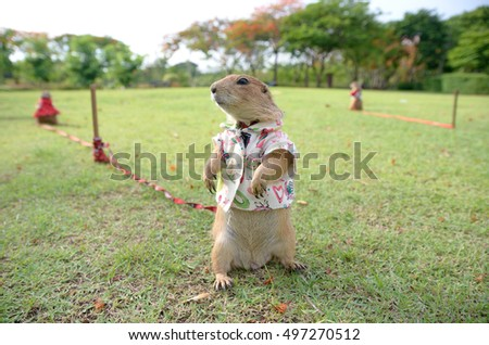 Prairie Dog with Clothes On Grassy Field park