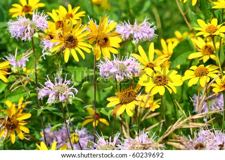 Prairie Flowers - stock photo