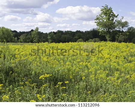 Prairie landscape in northern Illinois: field of goldenrod near woods in late summer - stock photo