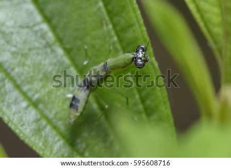 praying mantis on green leaf