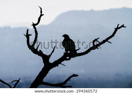 Predator against the blue sky - stock photo