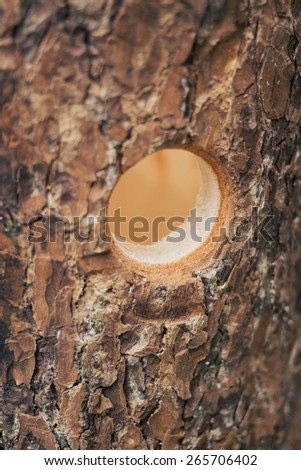 Predrilled holes in the wall of the birdhouse - stock photo