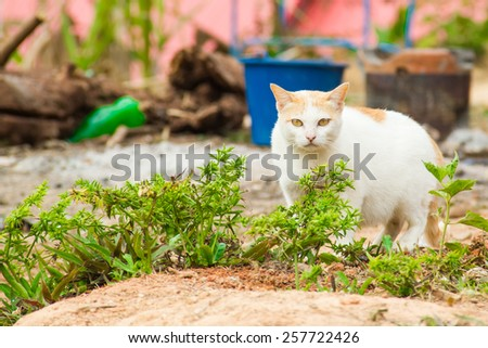 Pregnant Cat staying - stock photo