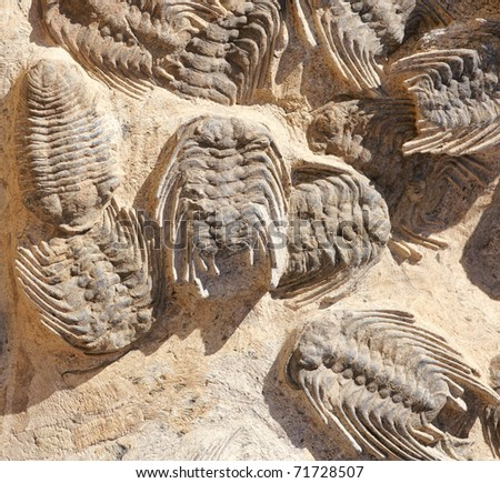 Prehistoric fossil - stock photo