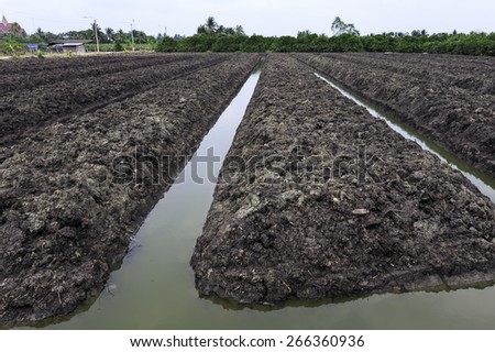 Preparation Of Soil Ready For Planting Flower - stock photo