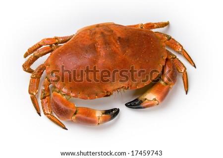 Prepared crab on white background - stock photo