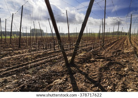 prepared fields to hops planting