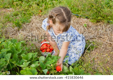 Preschool girl picking strawberry. Family time on self-picking farm, summer. Selective focus on girls head. - stock photo