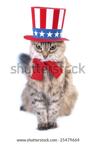 Presidents day cat - stock photo