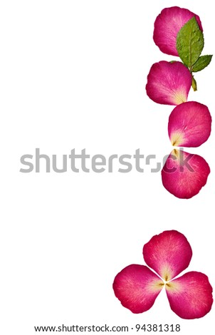 Press rose flowers on white backgroud - stock photo