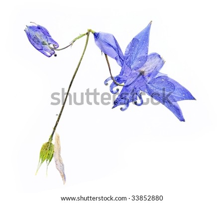 pressed flora against white background. useful design elements.