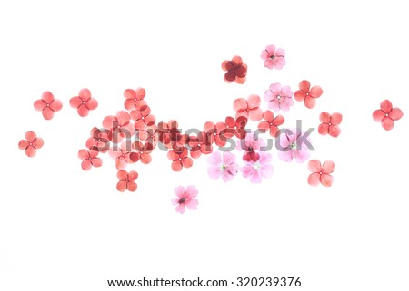 Pressed flower,red