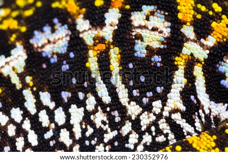 Presumably the jeweled chameleon or the Madagascar forest chameleon (Furcifer campani) in Madagascar - stock photo
