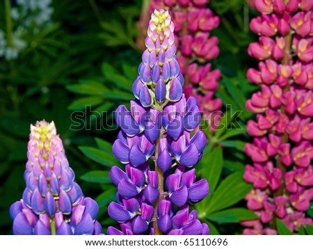 Pretty and Colorful Flowers Blooming in a Garden - stock photo