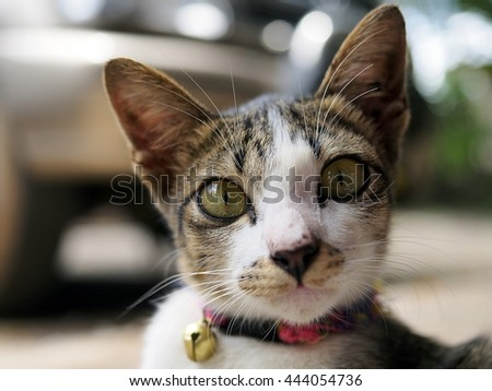 Pretty cat looking at camera with blur background.