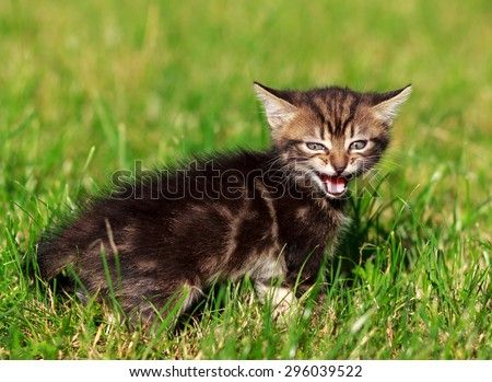 pretty cute striped cat playing in the grass