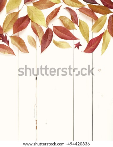 Pretty Fall Display of Pretty Sepia Brown Toned Ash Leaves on top for a Thanksgiving or Halloween Greeting Card on Rustic White Wood Board Background with room or space for copy, text, or your words