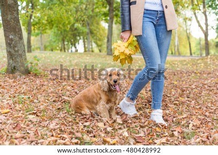 pretty girl in jeans and coat with bright colored leaves walking in autumn park with a small red dog