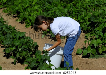 Pretty girl picks vegetables on the farm - stock photo