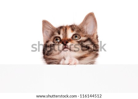 Pretty kitten with empty board isolated on white background - stock photo