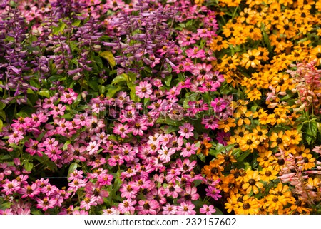 Pretty manicured flower garden. - stock photo