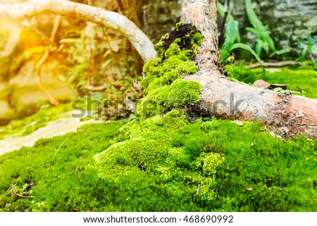 outdoor woods backgrounds. Pretty Nature Background. Closeup Moss On Growth Log With Bright Sunlight Outdoor At The Daytime Woods Backgrounds S