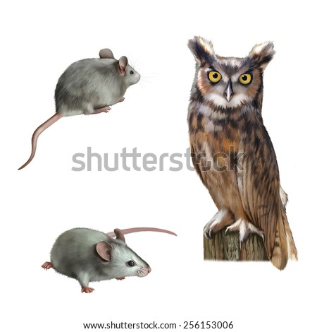 Pretty Owl sitting on a log cute white mouse holding cheese on white background - stock photo