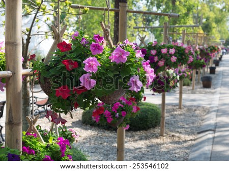 Pretty pink and purple flowers in hanging basket - stock photo