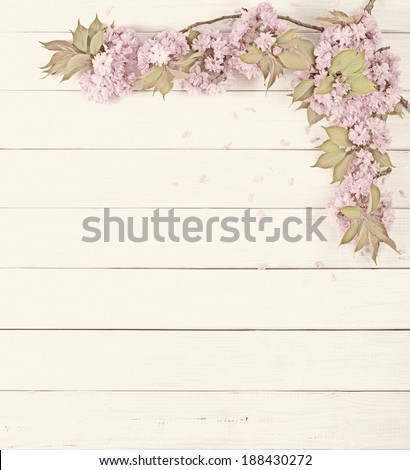 Pretty Pink Cherry Blossom Limbs on Rustic White Board Background with room or space for copy, text.  Vertical that can be horizontal with crop.  Faded old photo treatment. - stock photo