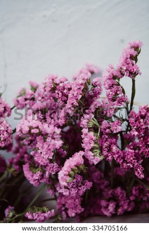 Pretty pink dry flowers against a white wall - stock photo