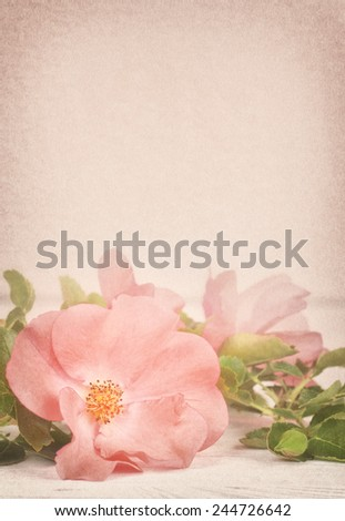 Pretty Pink Rose with Leaves on Rustic White Board Table with Room or Space in Background Above Top for Copy, Text, Your Words.  Vertical Mauve toned vintage tone with vignette - stock photo