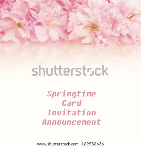 Pretty Pink Spring Cherry Blossom Clusters across the top or above with blank background room or space below for copy, text, or your words.  - stock photo