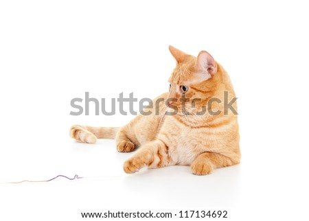 pretty red cat on the floor - stock photo