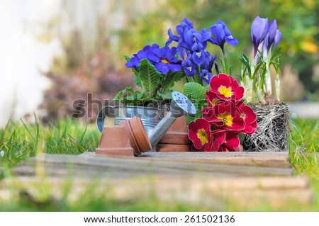 pretty springtime flowers on grass with little pots and watering can  - stock photo