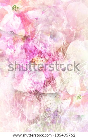 Pretty summer flowers, grungy background in white and pink - stock photo
