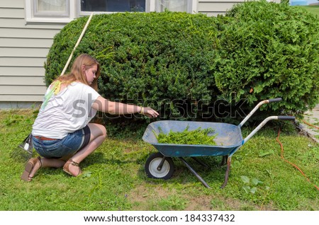 Pretty Teen Picking up Clippings from Freshly Cut Yews - stock photo