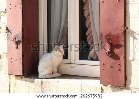 Pretty white cat sitting outside on a windowsill, France. - stock photo
