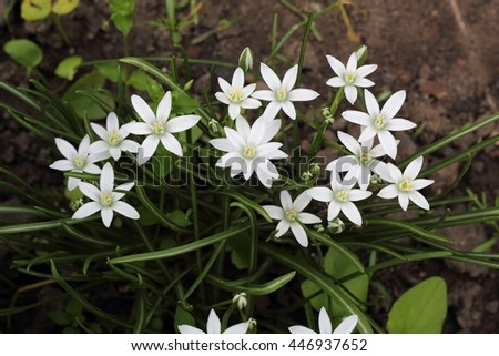 Pretty White Flowers Blooming in a Garden summer - stock photo