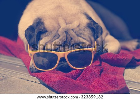 PrettyPug Relaxing on the towel with yellow sunglasses in the sunshine. Sunbathing background - stock photo