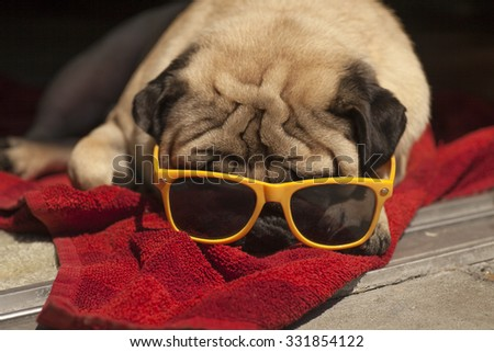 PrettyPug Relaxing on the towel with yellow sunglasses in the sunshine. Sunbathing background. - stock photo