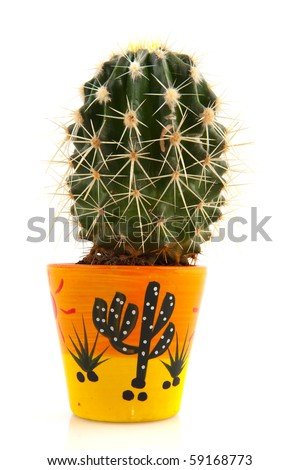 Prickly cactus in decorated flower pot isolated over white - stock photo
