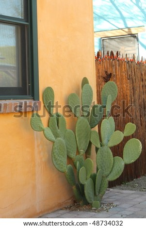 prickly pear cactus on a Tucson street - stock photo