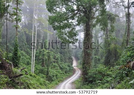 Primary rainforest  Danum Valley in Borneo One of the few primary rainforest around the globe. - stock photo