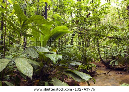 Primary tropical rainforest in a remote part of Yasuni National Park, Ecuador - stock photo