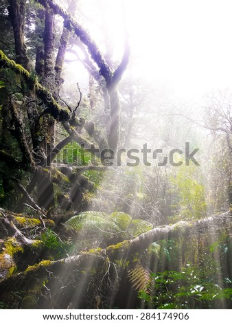 Primeval forest in New Zealand - stock photo