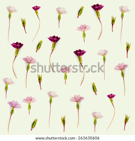 Primrose Wallpaper with vintage texture  - stock photo