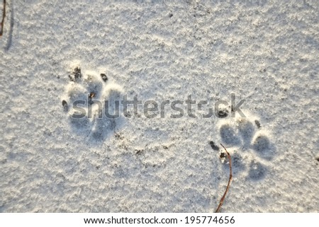 print paws in snow - stock photo